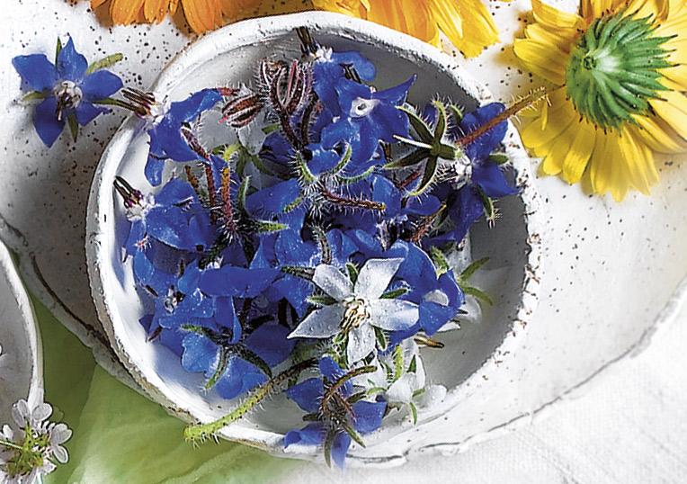 6 Flores Comestibles Para Oler Y Saborear