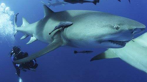 sharkwater extinction. Sharkwater extinction