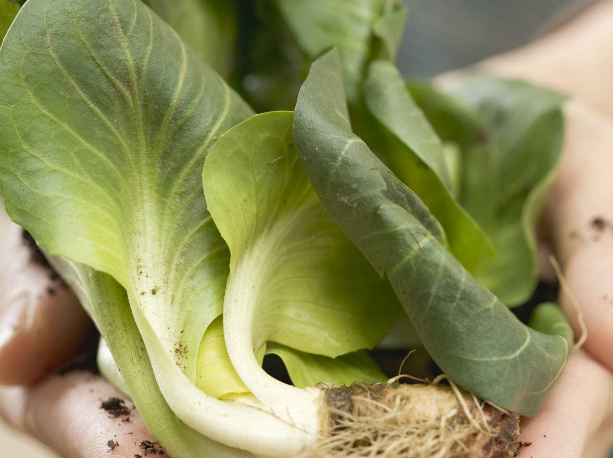 5 ideas para cocinar verduras de primavera