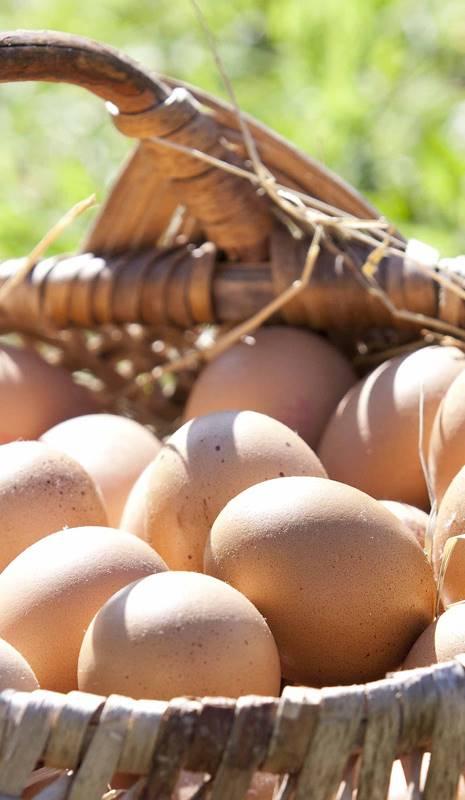 De consumo beneficios huevo gallina del de