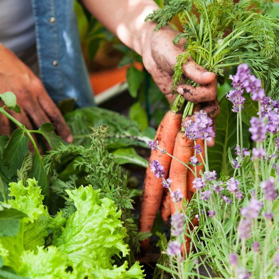5 recetas energéticas a base de raíces de la tierra