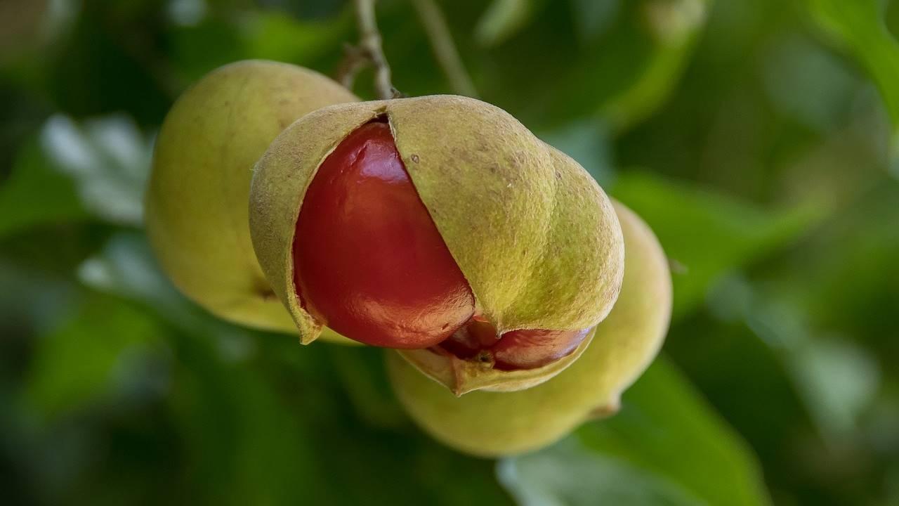 El Tamarindo Malabar La Planta Medicinal Mas Util Para Adelgazar