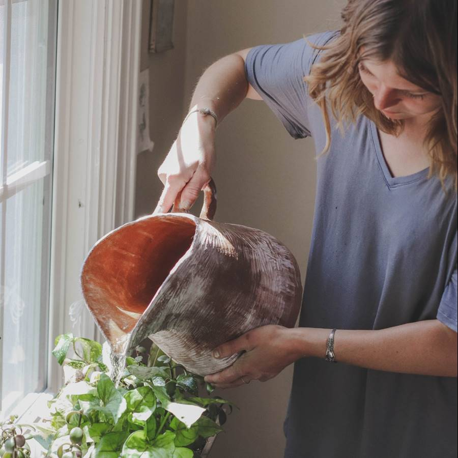 Aprovecha para cuidar tus plantas y respira mejor en casa