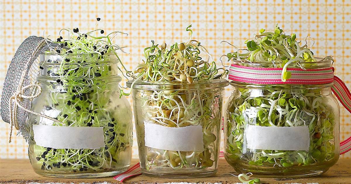 6 germinados caseros que no pueden faltar en tu mesa