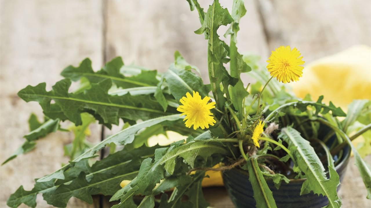 ¡Toca depurarse! 6 alimentos para eliminar toxinas