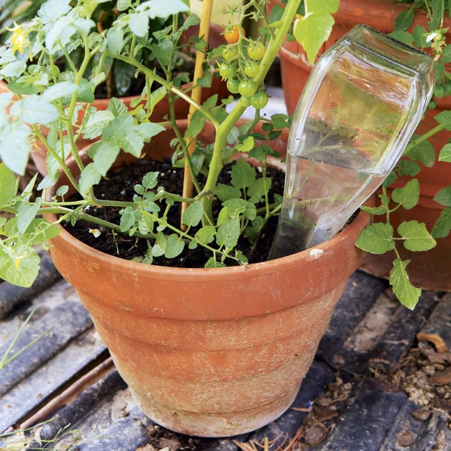 9 consejos para proporcionar agua a tus plantas en vacaciones