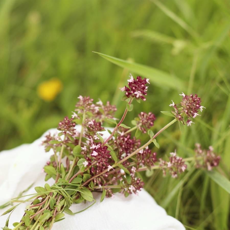 5 remedios naturales para la tos y la congestión