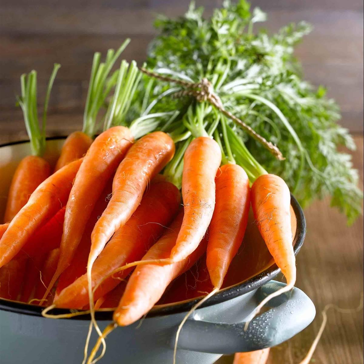 Zanahoria Propiedades Y Beneficios Para La Salud La zanahoria, originaria de europa y el sudoeste de asia, se cultiva, en la actualidad, en muchas es conocida por su raíz que está disponible en muchas variantes y colores como anaranjadas, blancas. zanahoria propiedades y beneficios