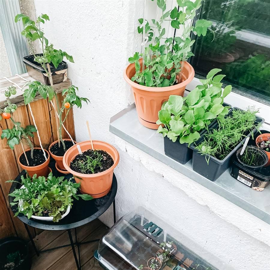 Huerto urbano en macetas: qué plantar y cómo cultivar hortalizas