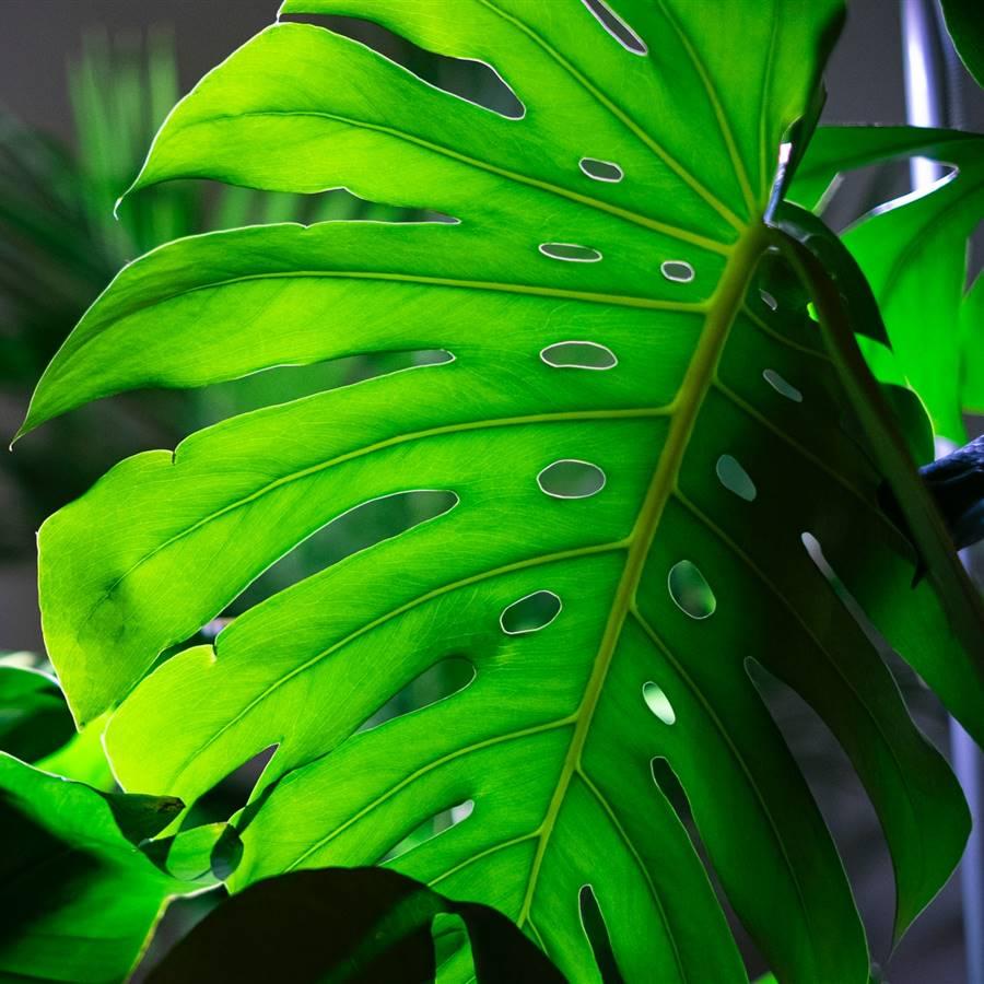 Plantas que necesitan poca luz: oasis en habitaciones oscuras