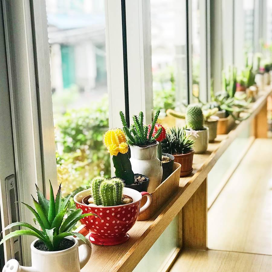 ¿Cuáles son los cactus más bonitos y fáciles de cuidar?