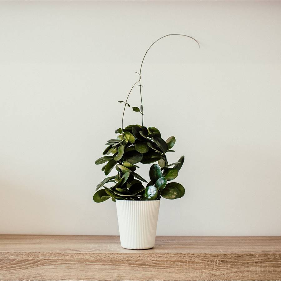 Con estos 7 consejos puedes crear más espacio en tu casa