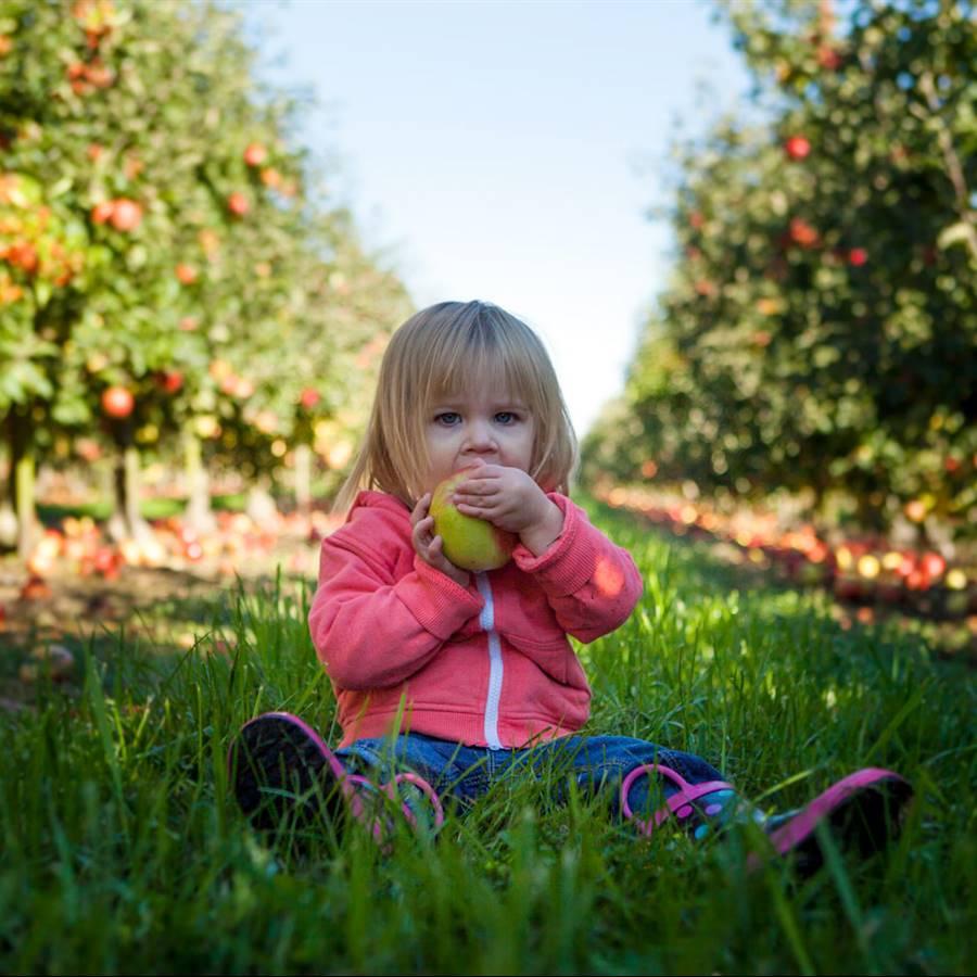8 iniciativas que aprovechan las frutas y verduras feas