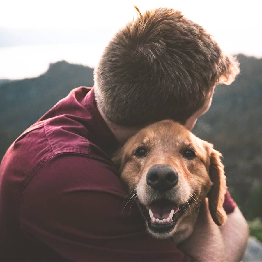 Vivir con un perro ayuda a sanar las emociones