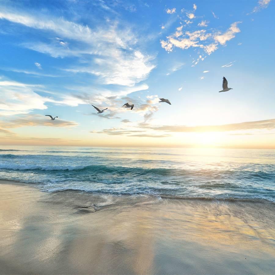 ¿Qué nos transmite el mar?