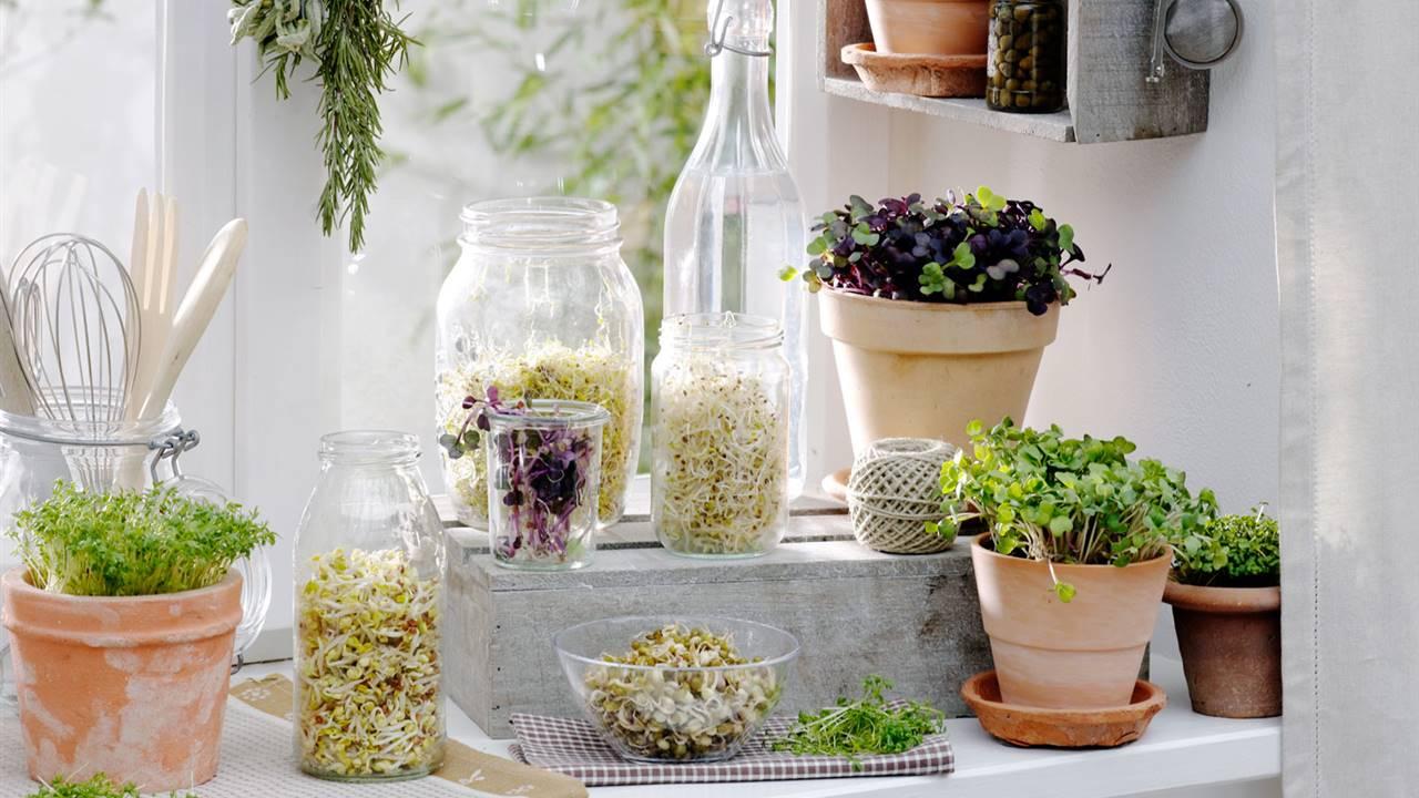 Cómo utilizar los germinados en la cocina