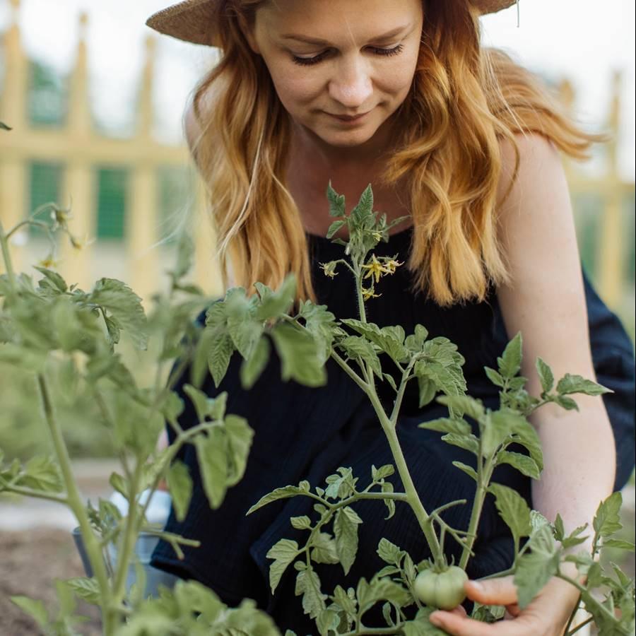 Calendario del huerto: qué plantar, recoger y trasplantar en junio