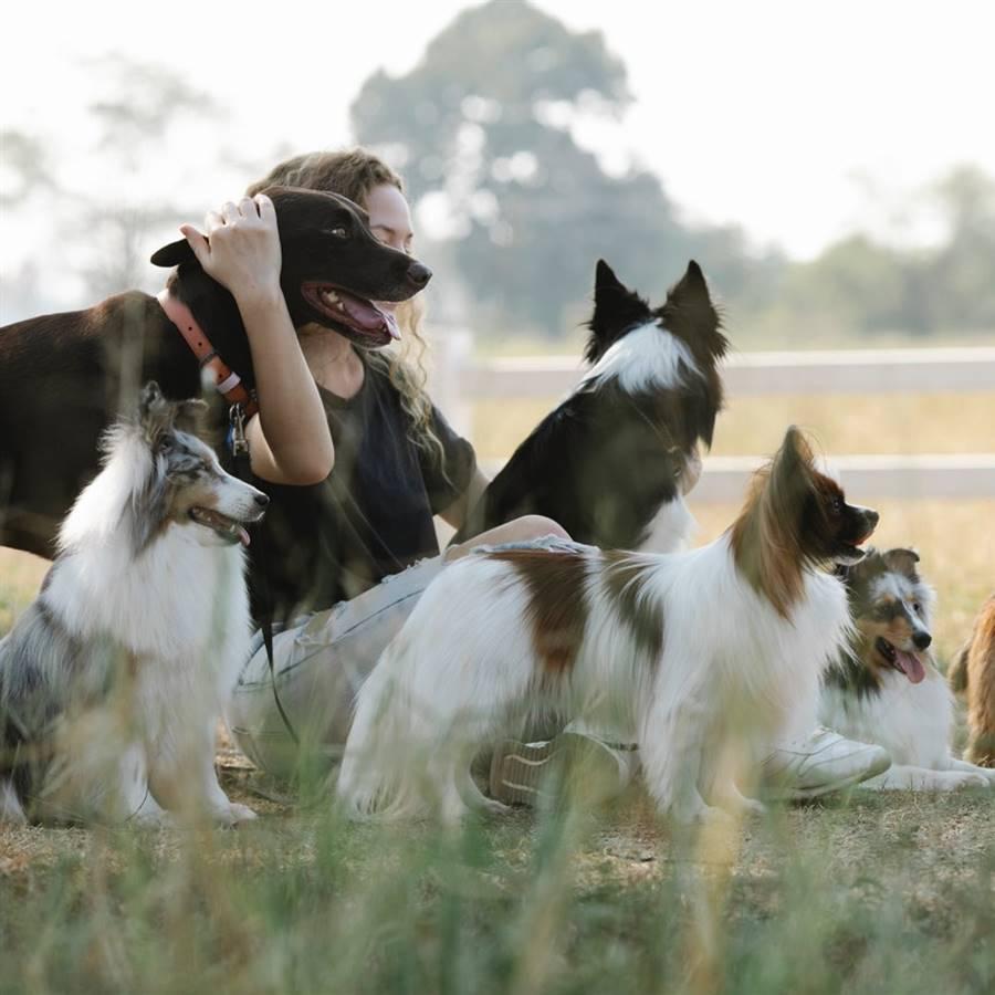 Beneficios de la terapia con perros, delfines o caballos